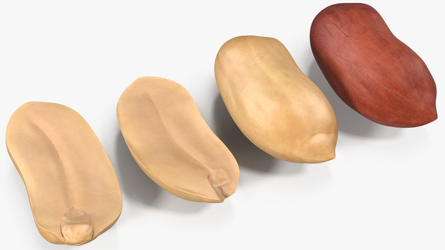 Peanut Seeds 2 royalty-free 3d model - Preview no. 19