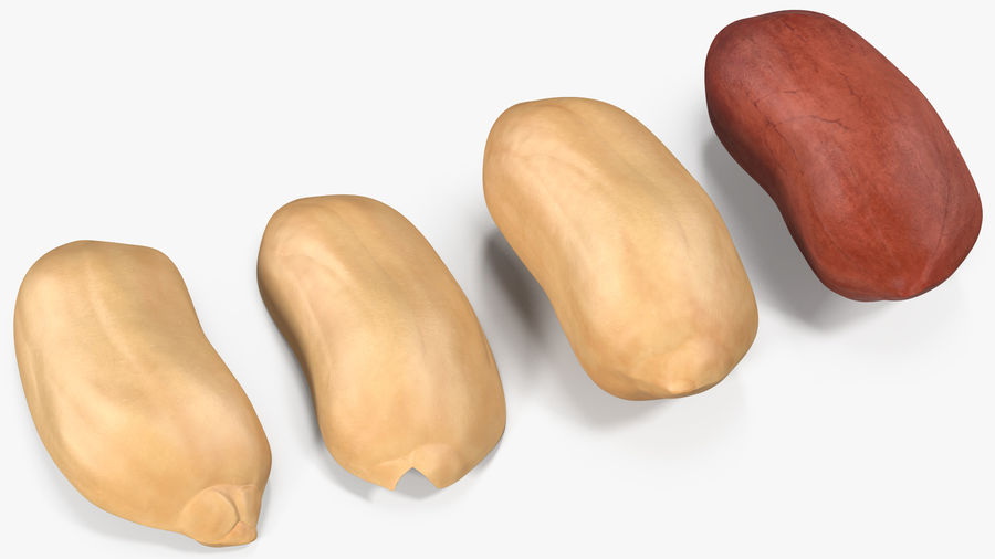 Peanut Seeds 2 royalty-free 3d model - Preview no. 20