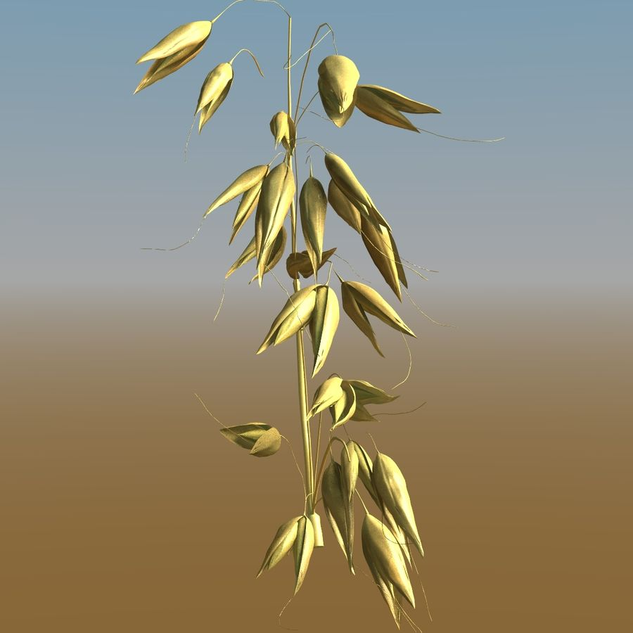 Grains royalty-free 3d model - Preview no. 6