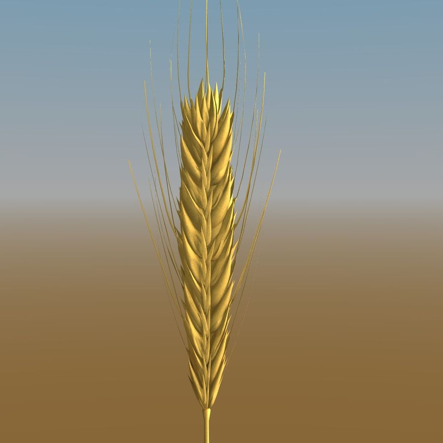Grains royalty-free 3d model - Preview no. 8