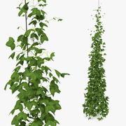 グリーンホップ植物の成長 3d model
