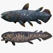 Rhizodus Coelacanth 3d model
