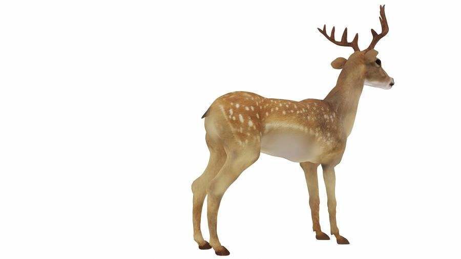 Cerf royalty-free 3d model - Preview no. 7