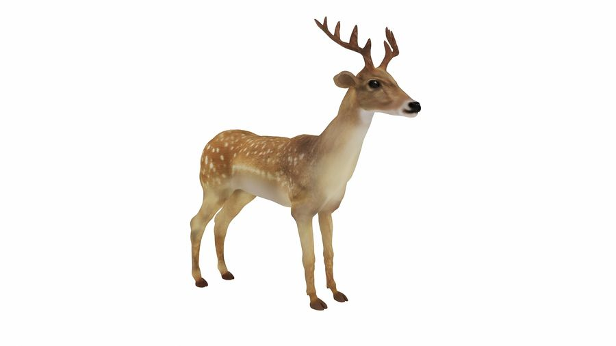 Cerf royalty-free 3d model - Preview no. 3