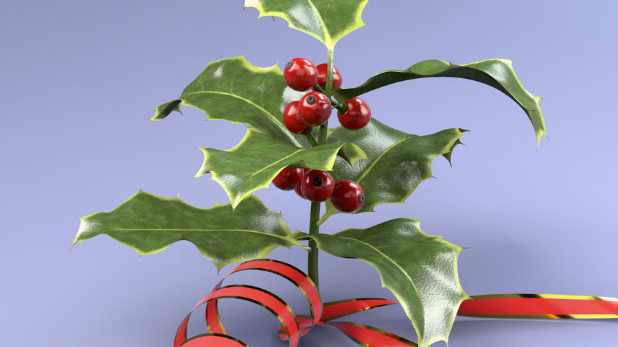 Christmas Holly royalty-free 3d model - Preview no. 7