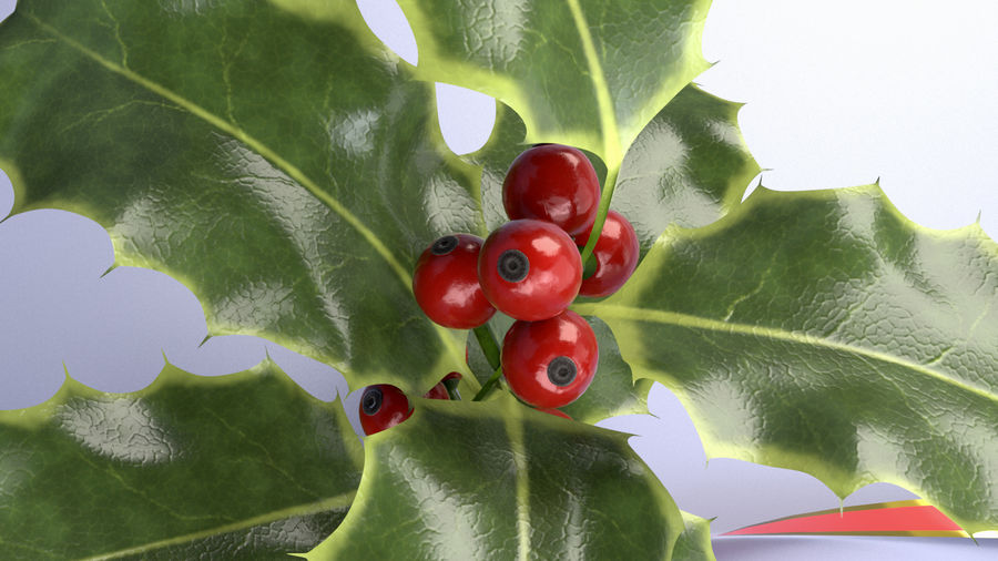 Christmas Holly royalty-free 3d model - Preview no. 5