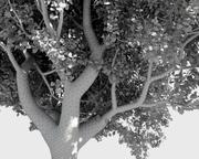 Trädpaket (+ GrowFX) 3d model