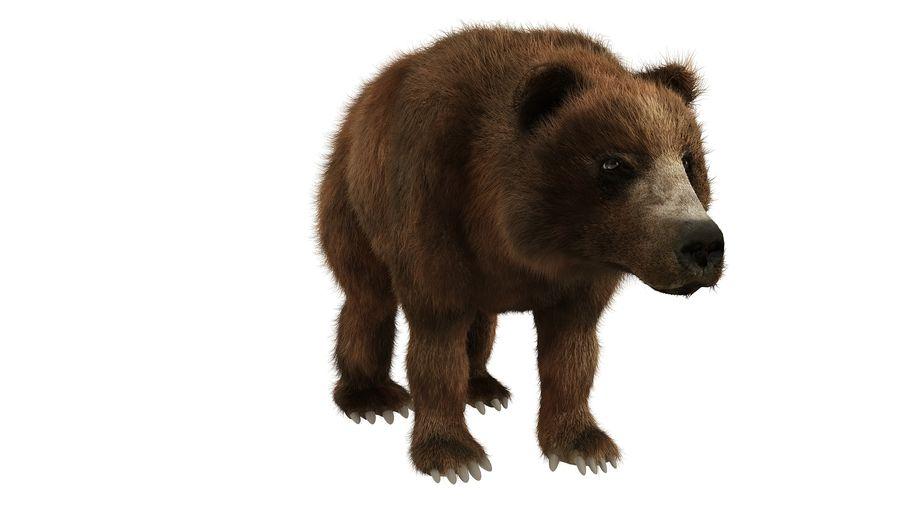 Niedźwiedź grizzly z futrem royalty-free 3d model - Preview no. 7