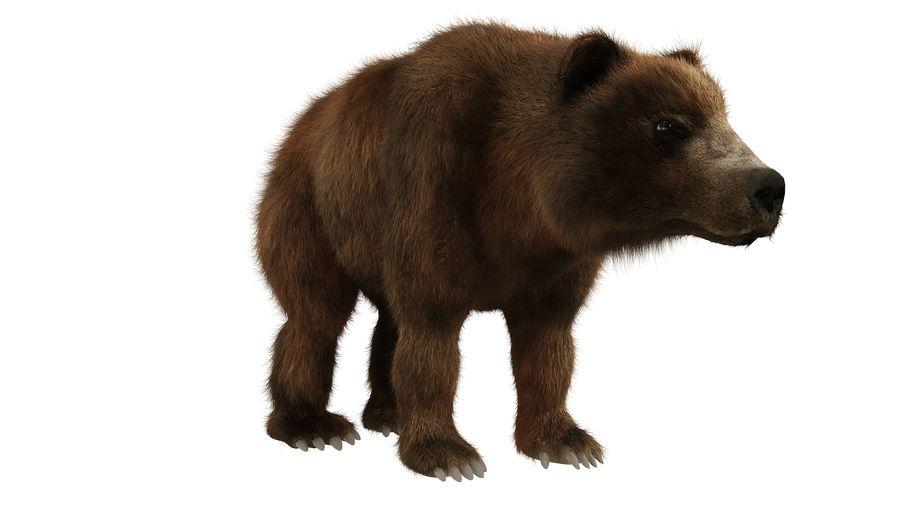 Niedźwiedź grizzly z futrem royalty-free 3d model - Preview no. 6