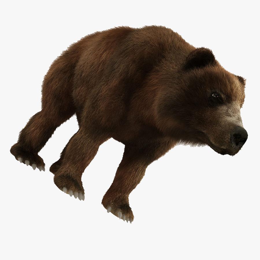 Niedźwiedź grizzly z futrem royalty-free 3d model - Preview no. 1
