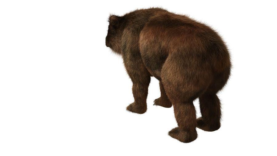 Niedźwiedź grizzly z futrem royalty-free 3d model - Preview no. 4