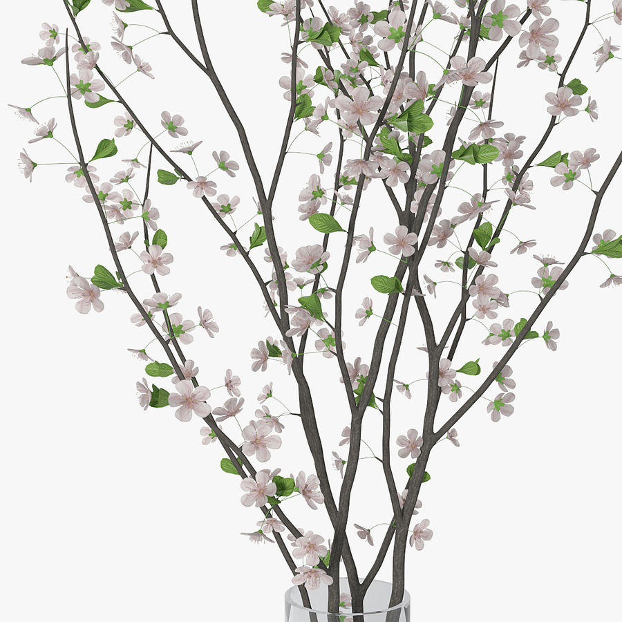 Cherry blossom 02 royalty-free 3d model - Preview no. 11