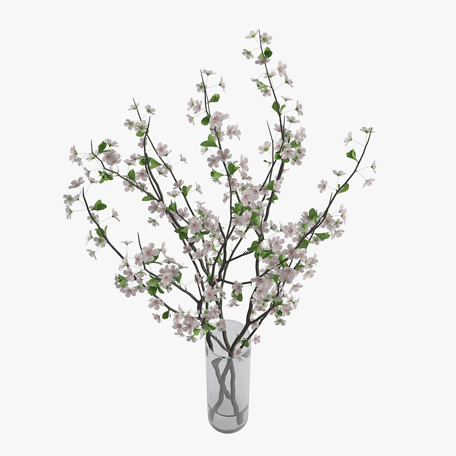 Cherry blossom 02 royalty-free 3d model - Preview no. 5