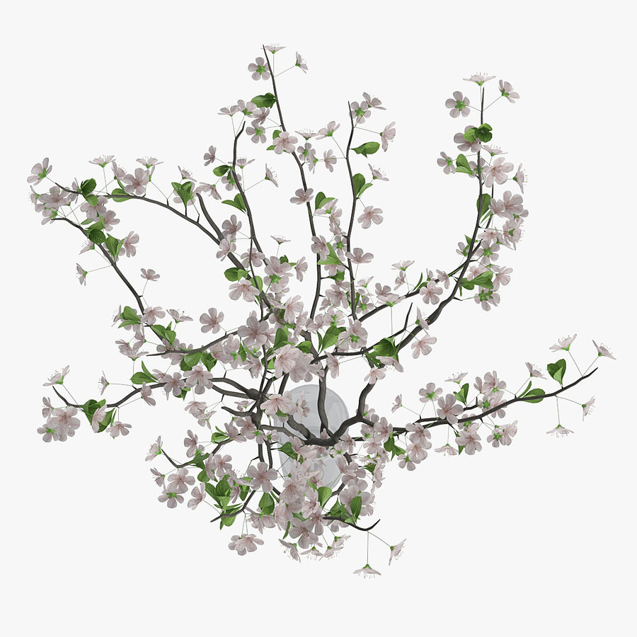 Cherry blossom 02 royalty-free 3d model - Preview no. 6