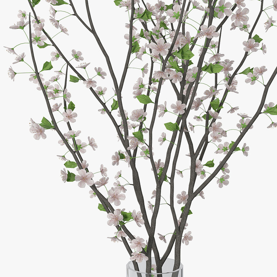 Cherry blossom 02 royalty-free 3d model - Preview no. 13