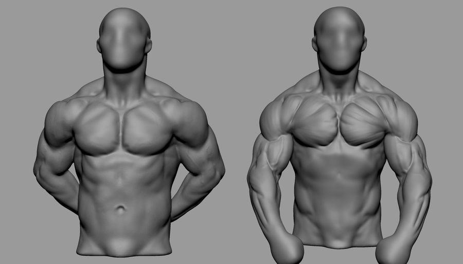 Male Torso Studies royalty-free 3d model - Preview no. 1