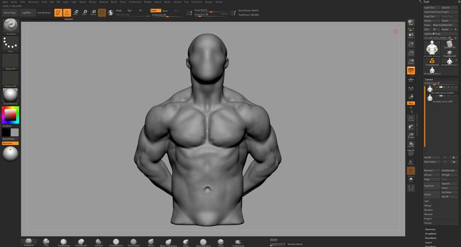 Male Torso Studies royalty-free 3d model - Preview no. 13