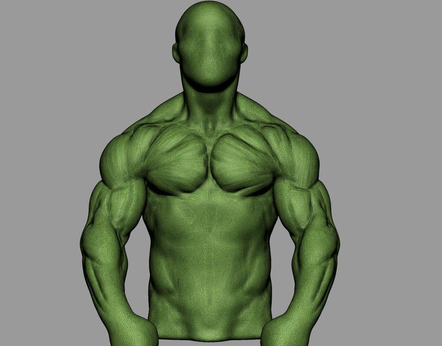 Male Torso Studies royalty-free 3d model - Preview no. 12