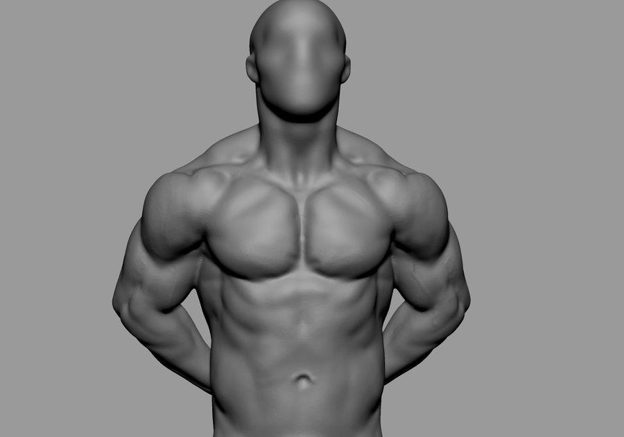Male Torso Studies royalty-free 3d model - Preview no. 2