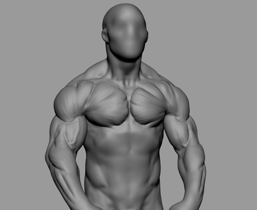 Male Torso Studies royalty-free 3d model - Preview no. 8