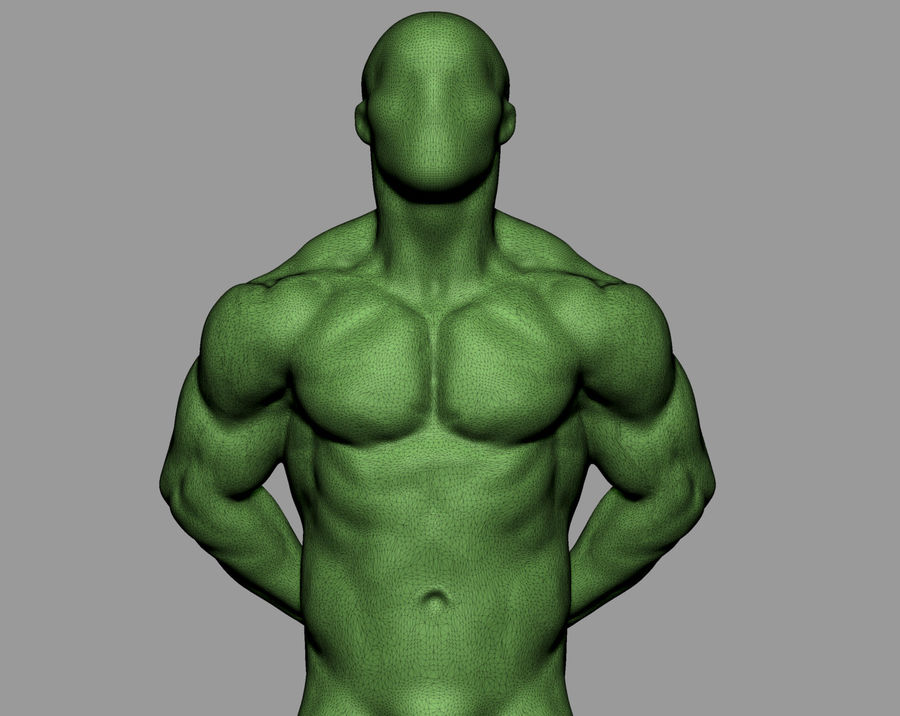 Male Torso Studies royalty-free 3d model - Preview no. 7