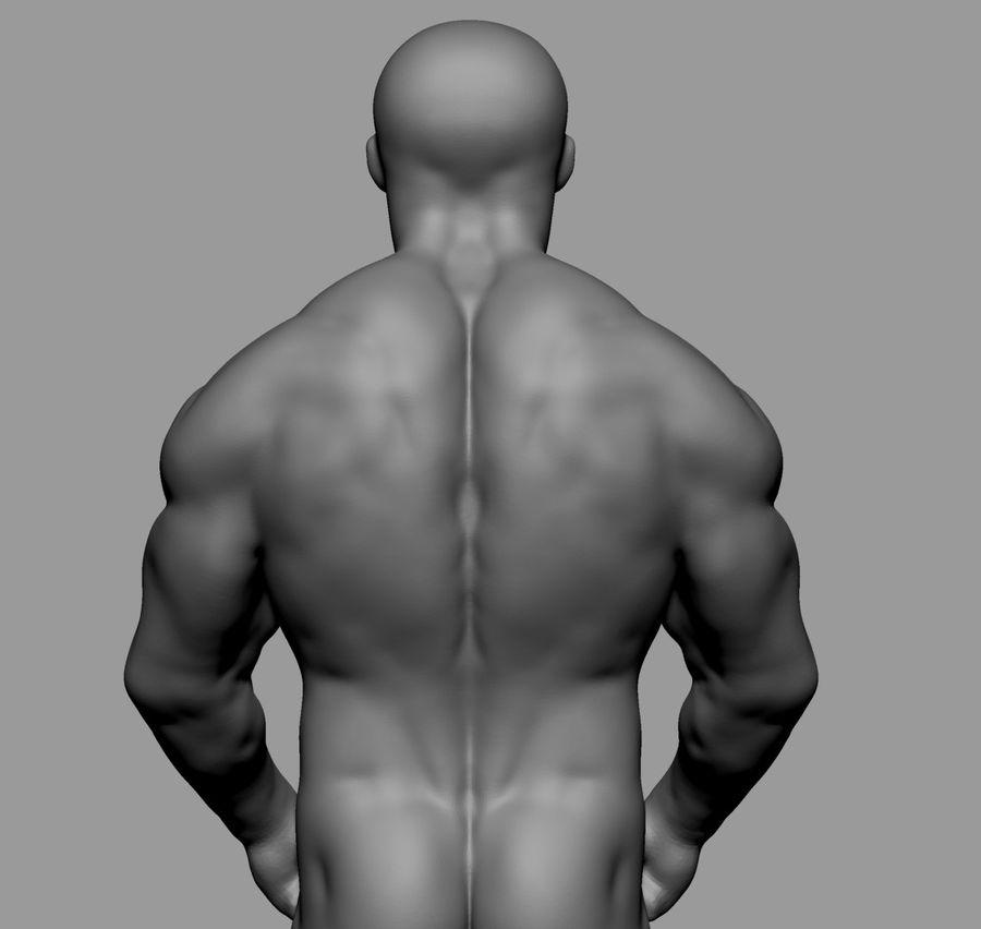 Male Torso Studies royalty-free 3d model - Preview no. 11