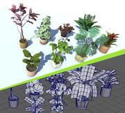 室内盆栽植物Lowpoly 3d model