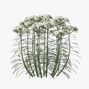 Flower Achillea millefolium 3d model