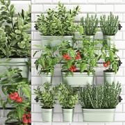 rośliny ozdobne do kuchni na poręczy 380 3d model
