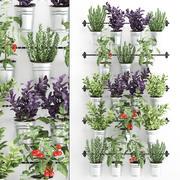 Rośliny ozdobne do kuchni na poręczy 380 1 3d model