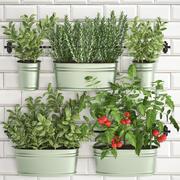 Rośliny ozdobne do kuchni na poręczy 380 2 3d model