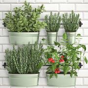 Rośliny ozdobne do kuchni na poręczy 380 3 3d model