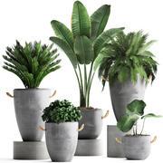 컬렉션 이국적인 식물 381 3d model
