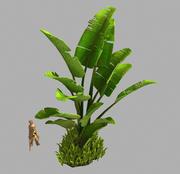 大叶植物-树32 3d model