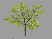 多くの葉-木32 3d model