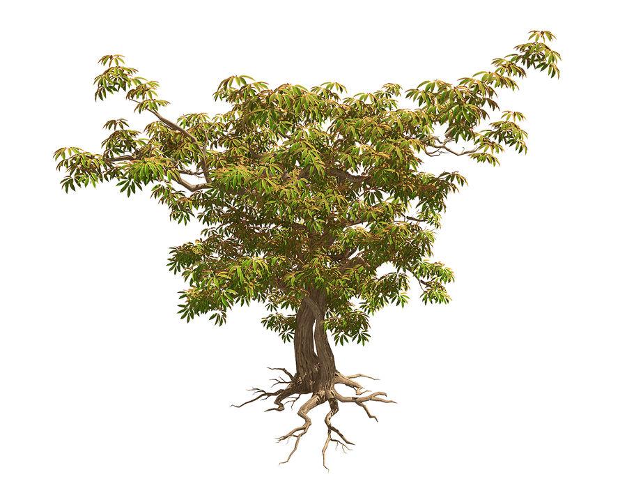 Острые листья - Дерево 32 royalty-free 3d model - Preview no. 2