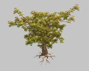 날카로운 잎-나무 32 3d model