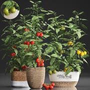 부엌 용 장식 식물 385 토마토 3d model