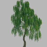 Orman - Huş Ağacı 45 3d model
