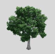 森林-灰树32 3d model