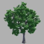 森林-灰树54 3d model