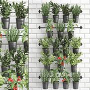 Rośliny ozdobne do kuchni na poręczy 3802 3d model