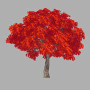 森-赤いカエデ37 3d model