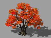 Forest - Red Tree 02 3d model