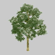 森-カエデの木78 3d model