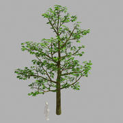 Forest Plants - Trees 63 3d model