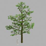 Rośliny leśne - drzewa 63 3d model