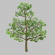 Rośliny leśne - drzewa 64 3d model