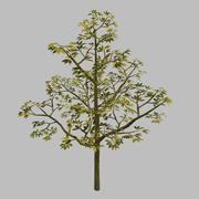 Rośliny leśne - drzewa 65 3d model