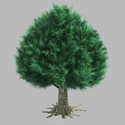 Trees - Cypress 06 3d model